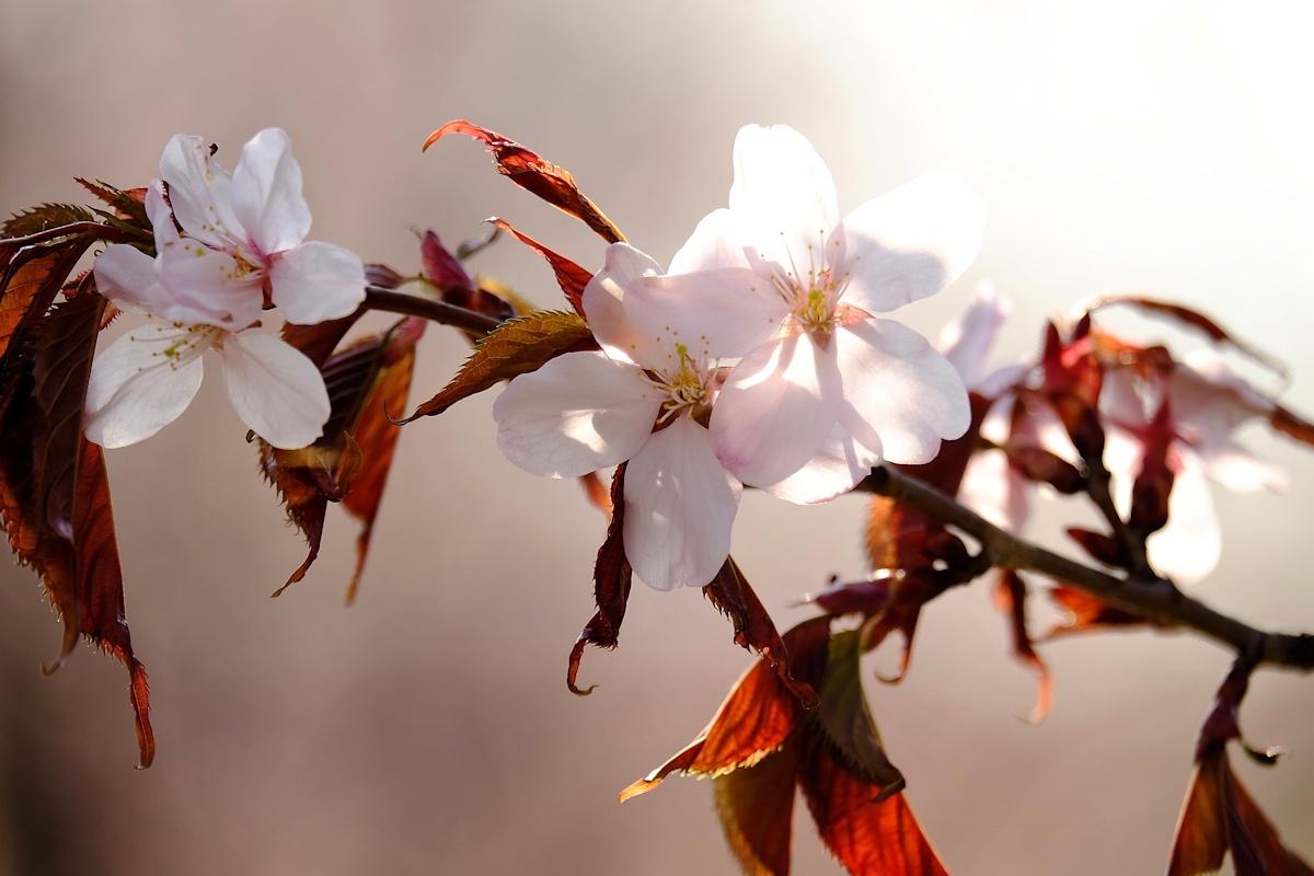 桜四月散歩道_e0051186_17312960.jpg