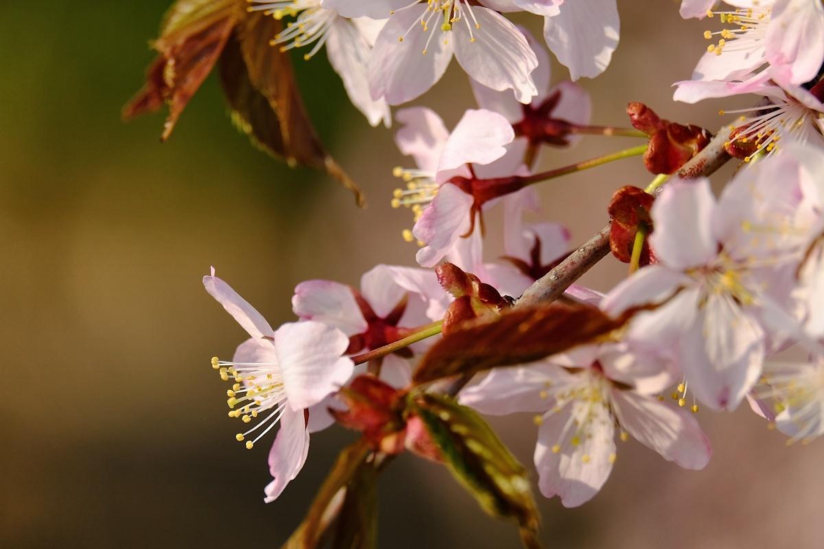 桜四月散歩道_e0051186_17314922.jpg