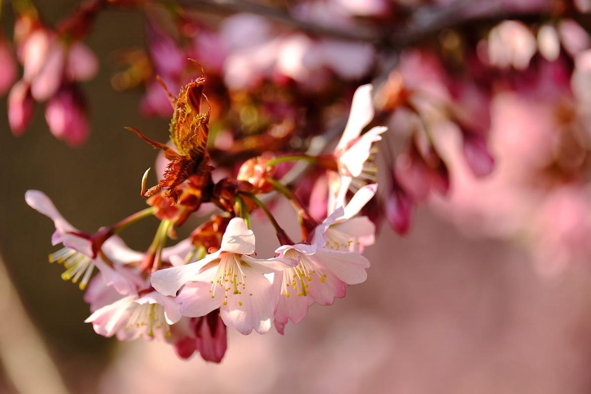 桜四月散歩道_e0051186_17315964.jpg