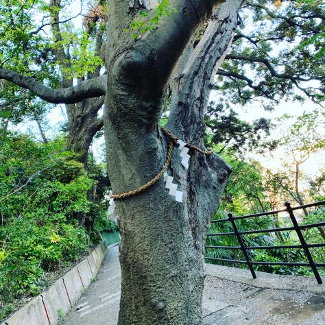 自宅から近くの、森浅間神社。_a0112393_12534620.jpg