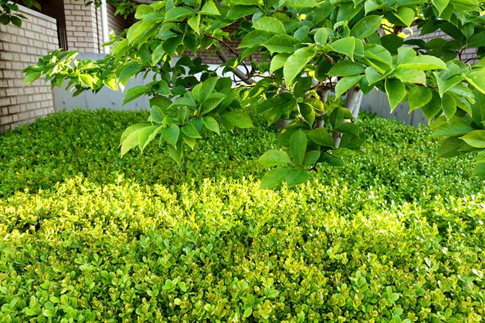 初夏へ_e0277800_21413802.jpg