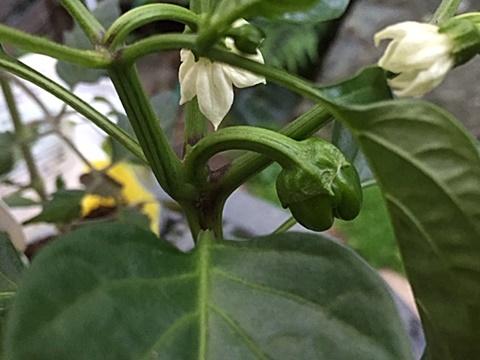 サラダ用 野菜の苗3種類植えました~♬_d0046702_20361107.jpg