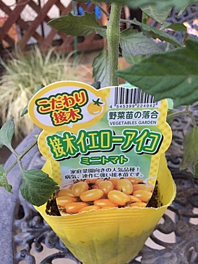 サラダ用 野菜の苗3種類植えました~♬_d0046702_20391103.jpg