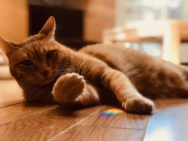 虹をGET!_f0242002_19391603.jpg
