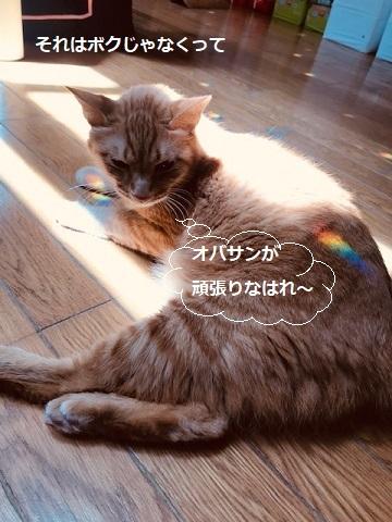 虹をGET!_f0242002_19392379.jpg