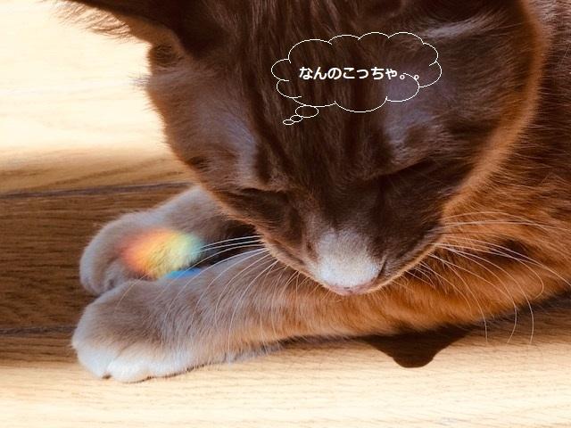 虹をGET!_f0242002_19393737.jpg