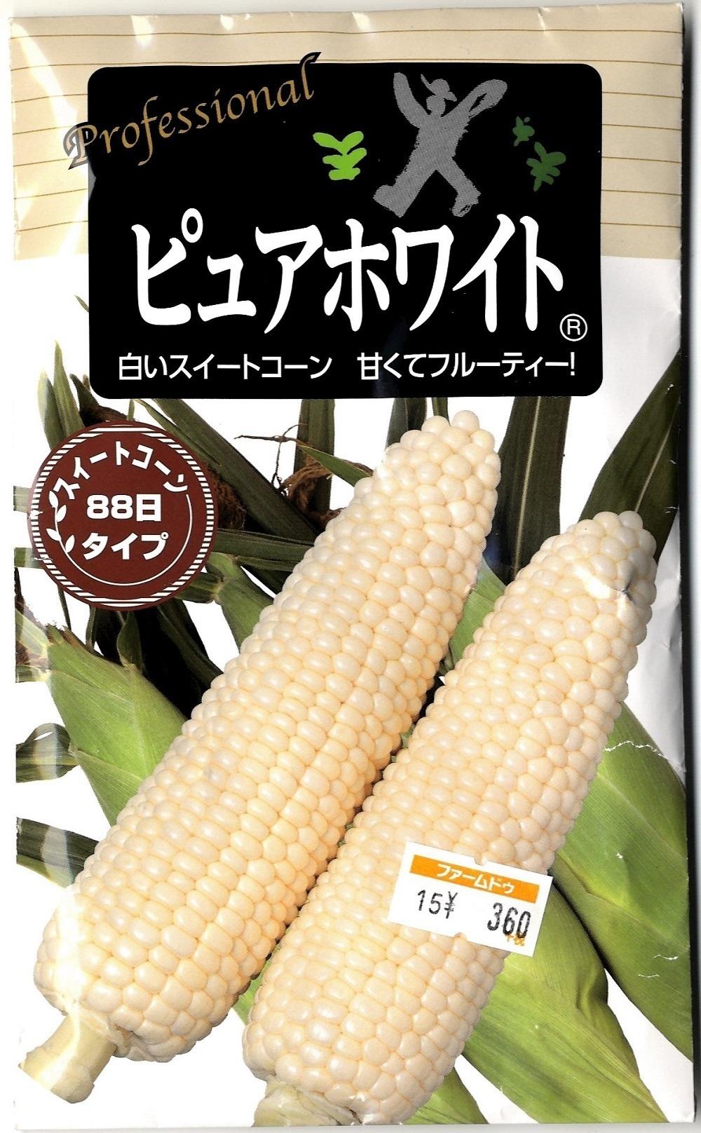 野菜の苗と種(かぐらがらし)_c0335218_19400802.jpg