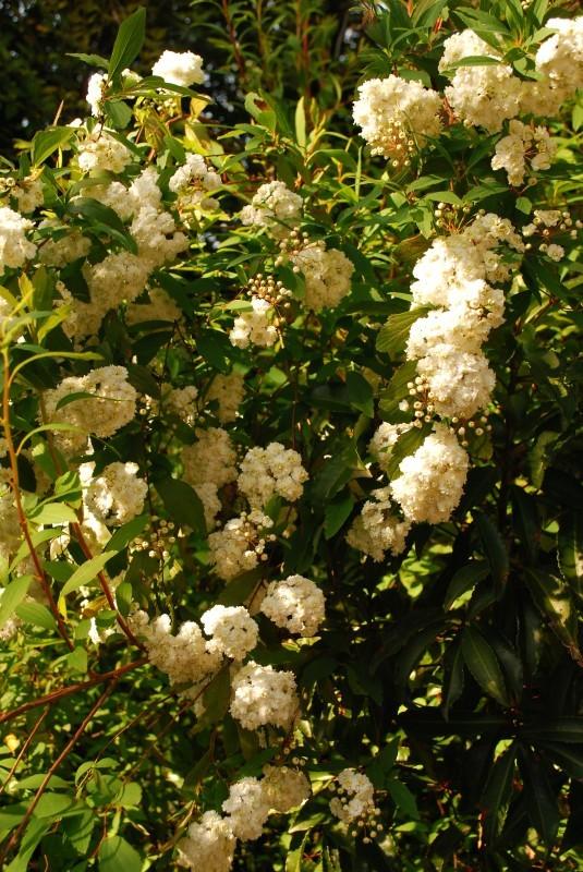4月の庭_b0280025_00032972.jpg