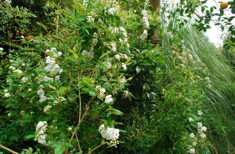 4月の庭_b0280025_00045447.jpg