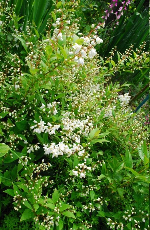 4月の庭_b0280025_00111459.jpg
