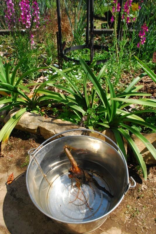 4月の庭_b0280025_00535939.jpg