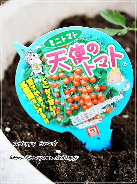 鯛めし弁当と天使のトマトの苗♪_f0348032_16481868.jpg