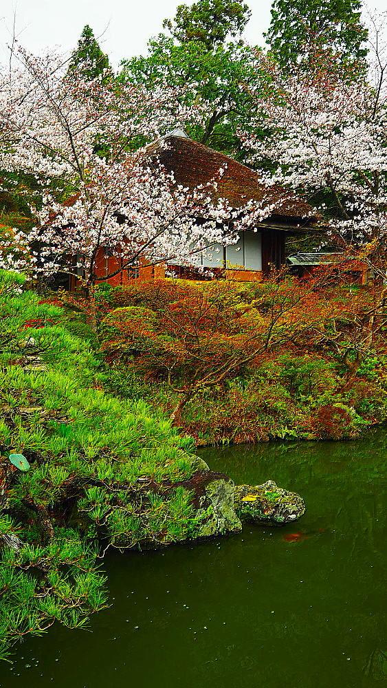 京都 ユキヤナギと桜と庭園_a0287533_23021079.jpg