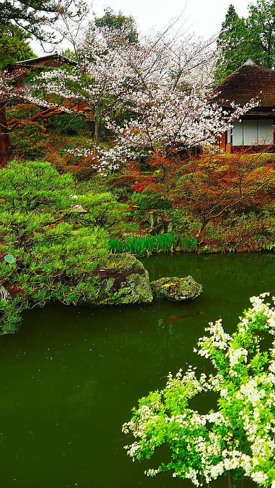 京都 ユキヤナギと桜と庭園_a0287533_23021110.jpg