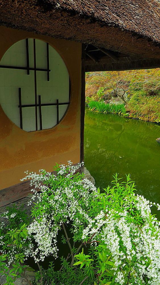 京都 ユキヤナギと桜と庭園_a0287533_23021158.jpg