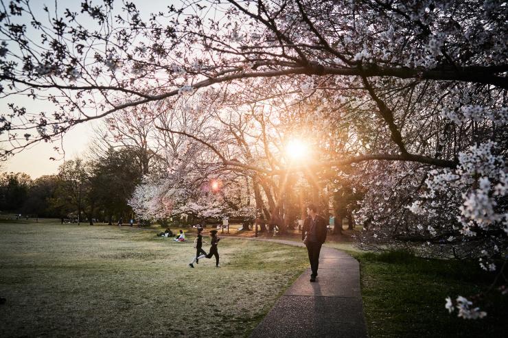 桜(4cut)_e0342136_19134809.jpg