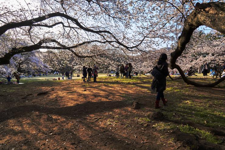 桜(4cut)_e0342136_19143126.jpg