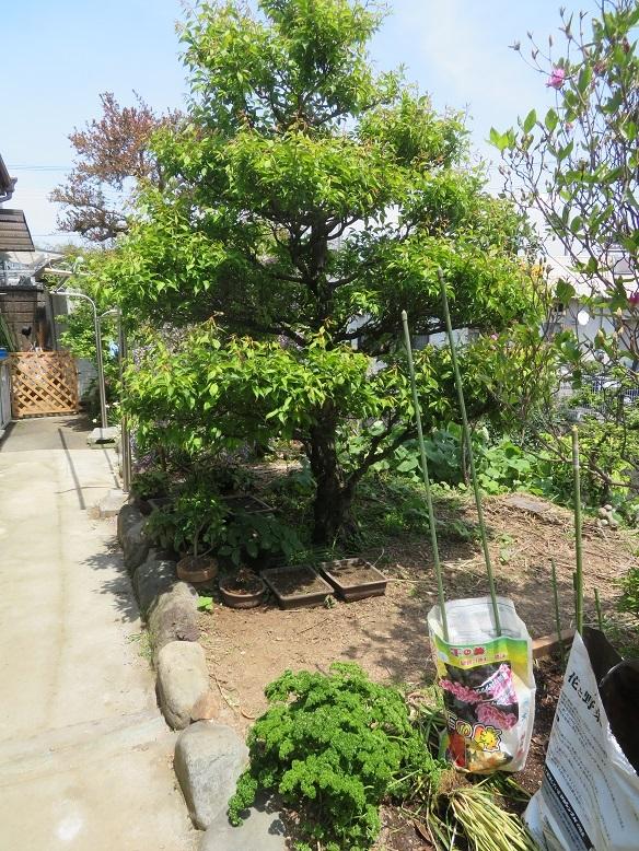 庭の木と花と野菜。_b0089338_01452379.jpg