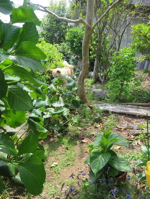 庭の木と花と野菜。_b0089338_01453316.jpg