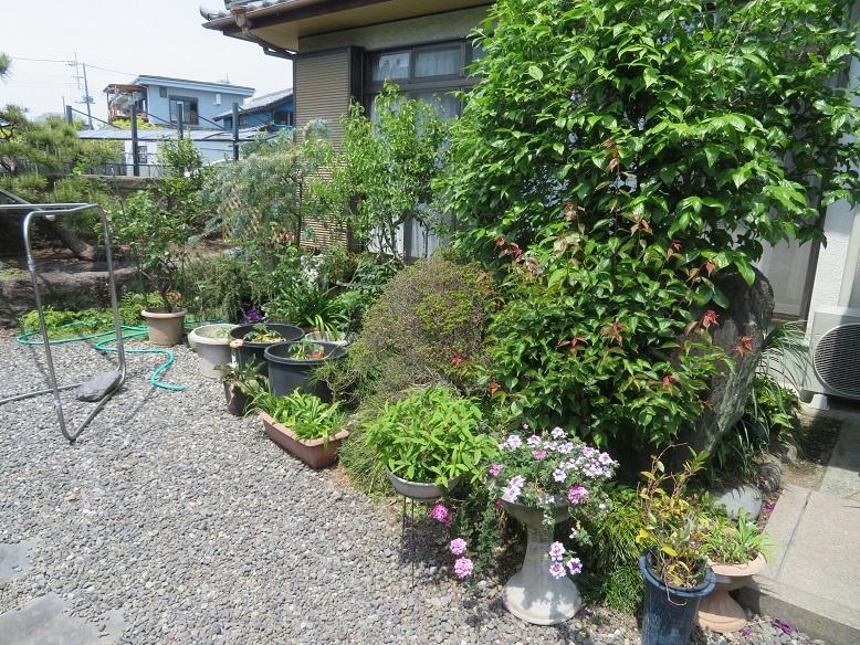 庭の木と花と野菜。_b0089338_01454141.jpg