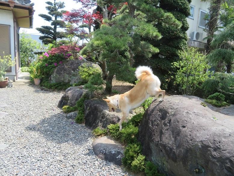 庭の木と花と野菜。_b0089338_01454853.jpg