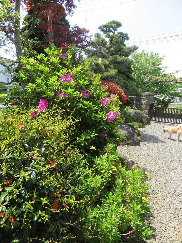 庭の木と花と野菜。_b0089338_01455696.jpg
