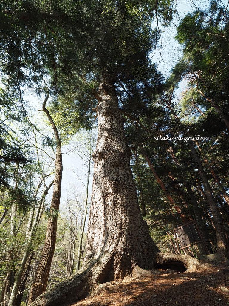 学びの場は自然の森_b0133243_23543843.jpg