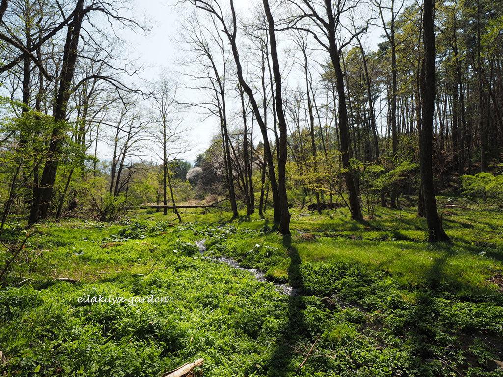 学びの場は自然の森_b0133243_23544693.jpg