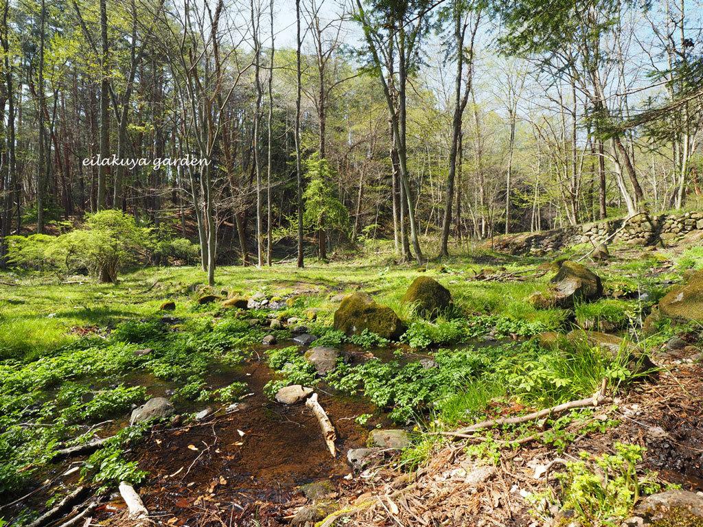 学びの場は自然の森_b0133243_23544943.jpg