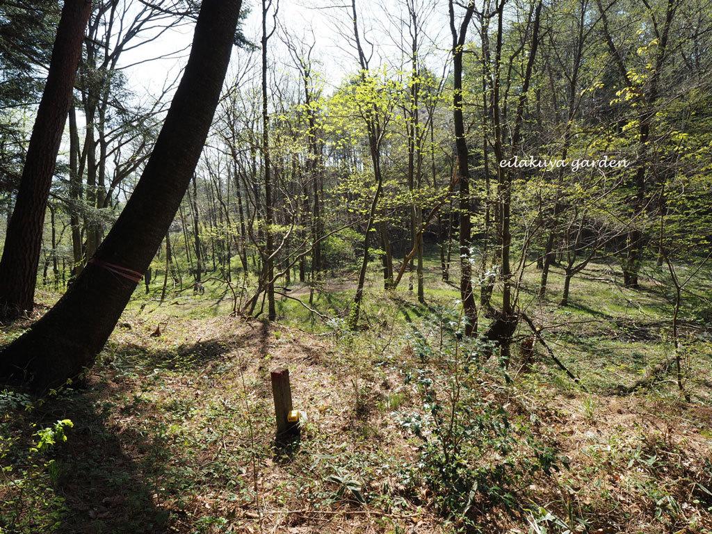 学びの場は自然の森_b0133243_23545160.jpg