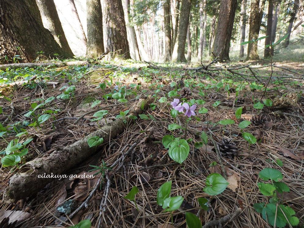 学びの場は自然の森_b0133243_23545451.jpg