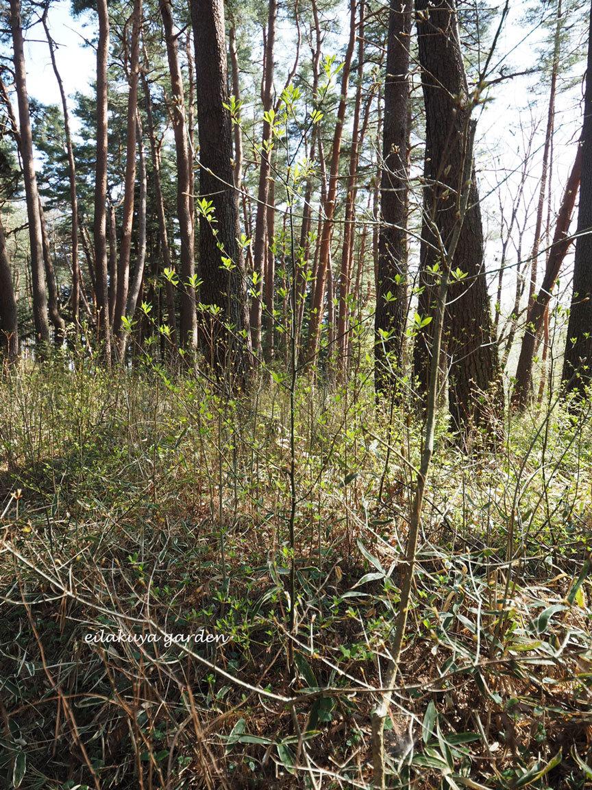 学びの場は自然の森_b0133243_23545671.jpg
