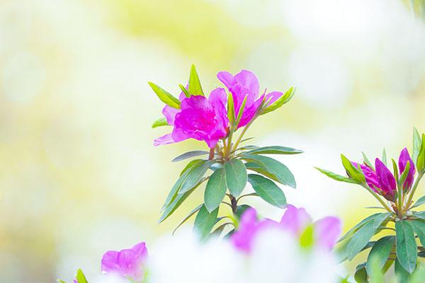 そしてツツジは咲き誇る_e0022047_22090519.jpg