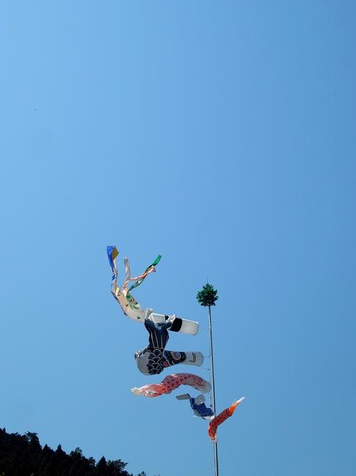花山椒・・・五月晴れ、山より高い鯉のぼり!_d0005250_18293880.jpg