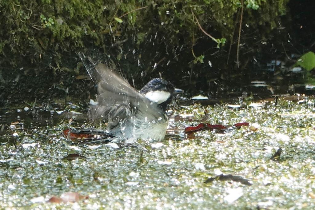 野鳥トレ 205 再度公園~森林植物園_b0227552_19075024.jpg