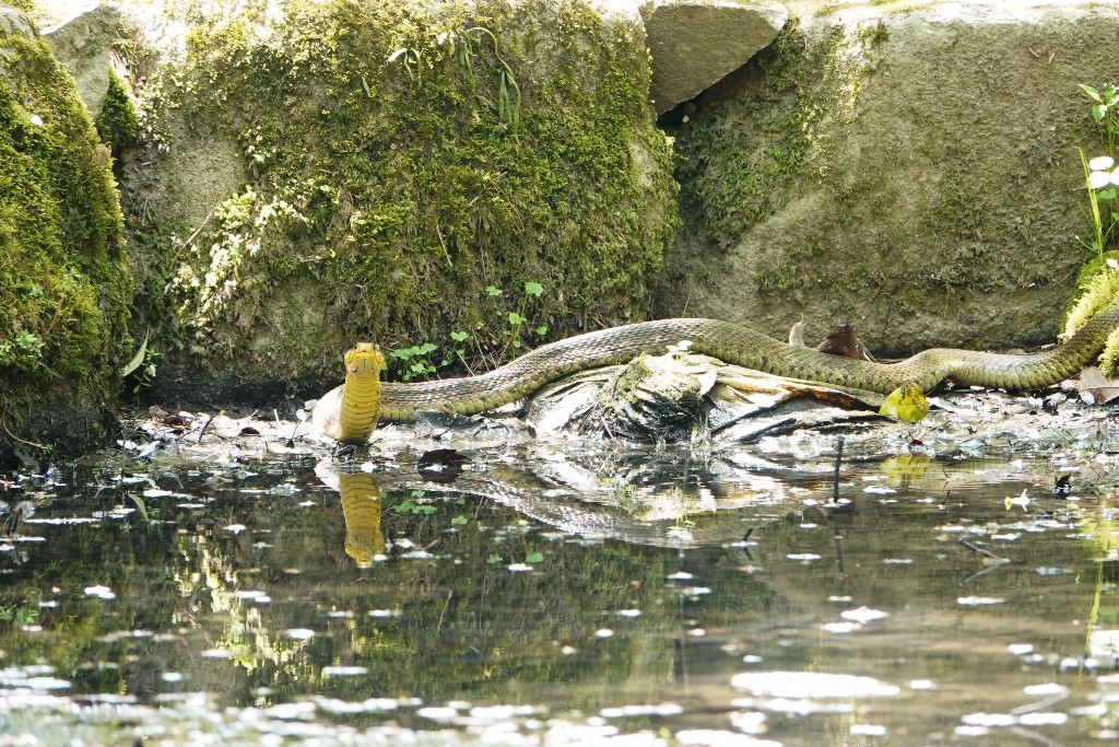 野鳥トレ 205 再度公園~森林植物園_b0227552_19075068.jpg