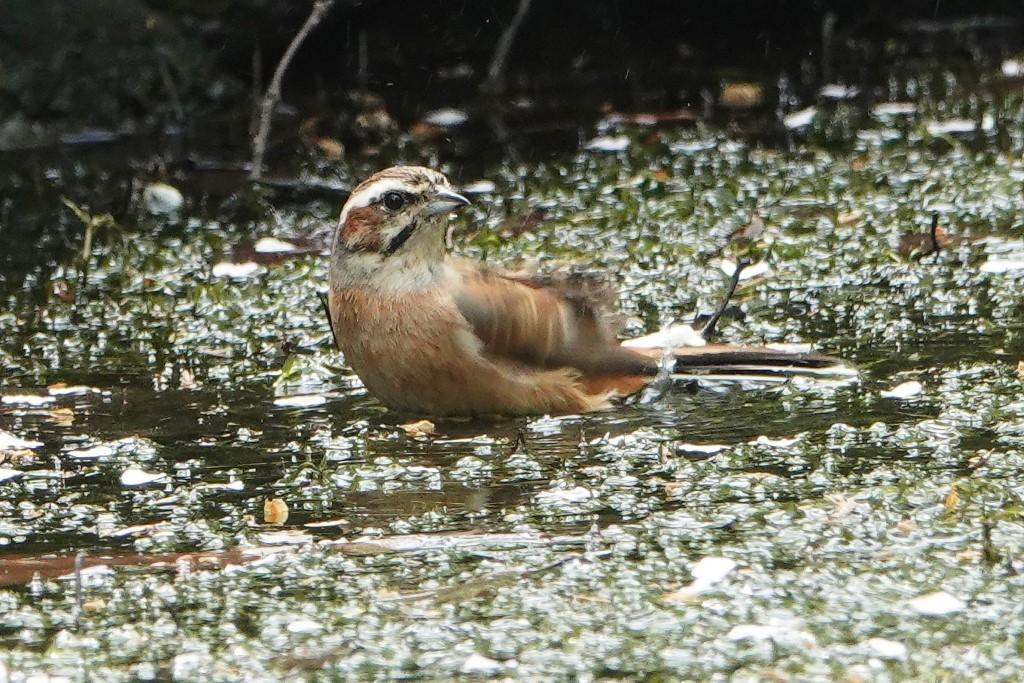 野鳥トレ 205 再度公園~森林植物園_b0227552_19075086.jpg