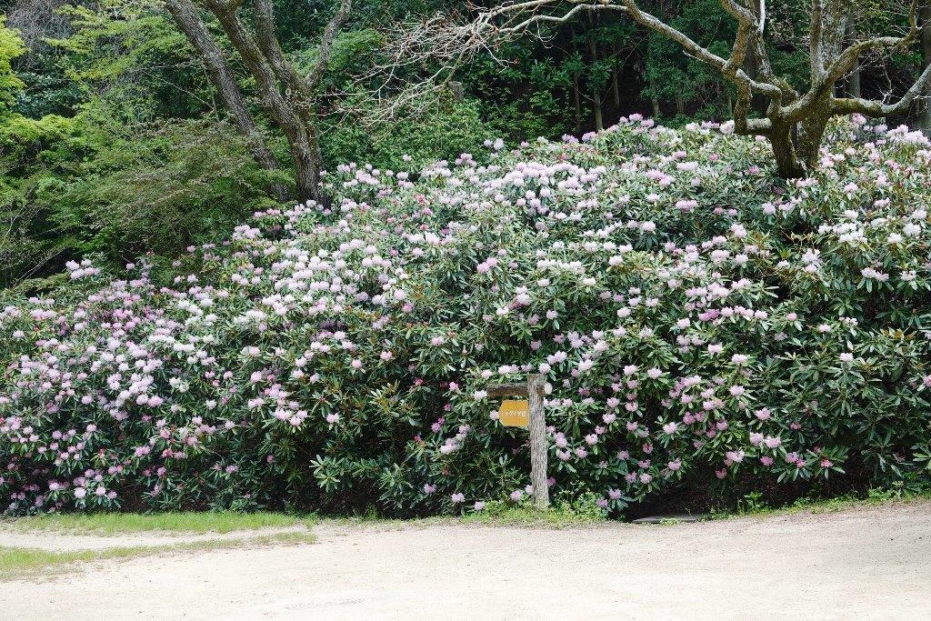 野鳥トレ 205 再度公園~森林植物園_b0227552_19075138.jpg