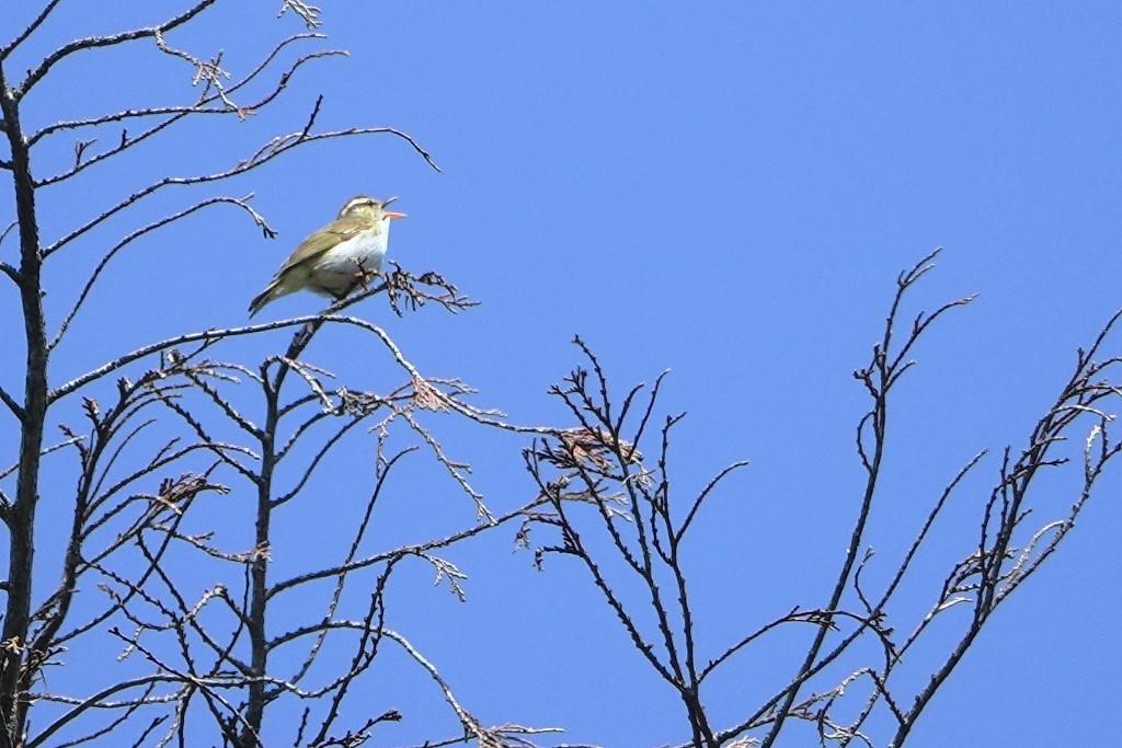 野鳥トレ 205 再度公園~森林植物園_b0227552_19075167.jpg