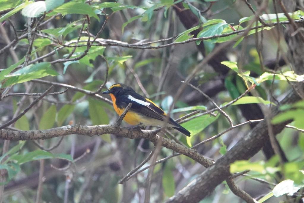 野鳥トレ 205 再度公園~森林植物園_b0227552_19075183.jpg