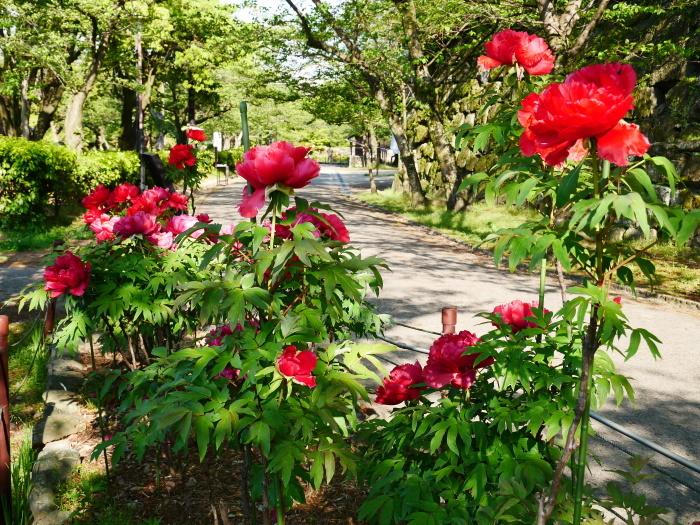 和歌山城公園にて  2020-05-03 00:00   _b0093754_23342670.jpg