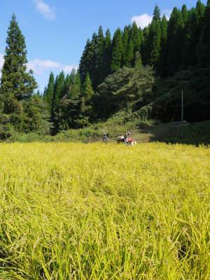 米作りの挑戦(2020年) 昨年より1週間早く苗床を作りました!(前編:米作りに取り組むわけとこの地の環境)_a0254656_17570579.jpg