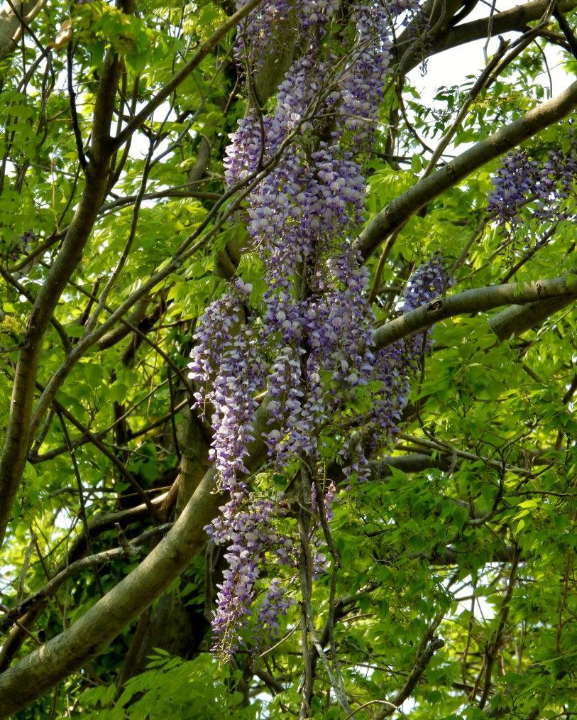 木の花と帰化植物_c0305565_17381172.jpg