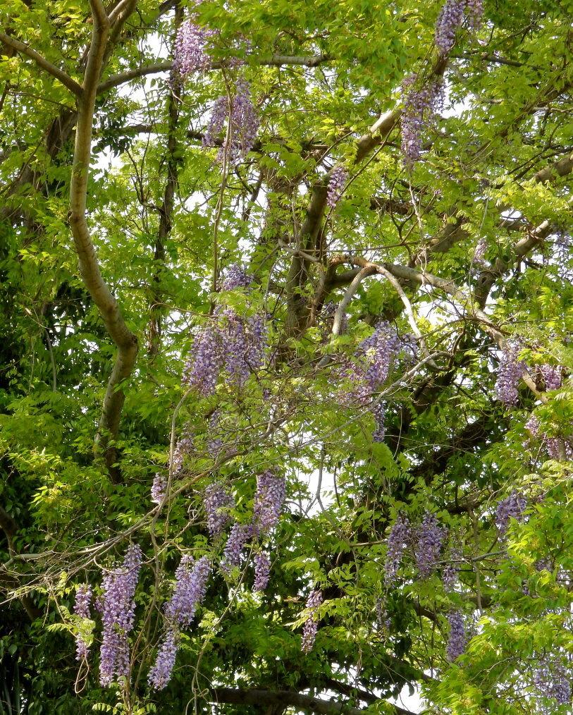 木の花と帰化植物_c0305565_17383392.jpg