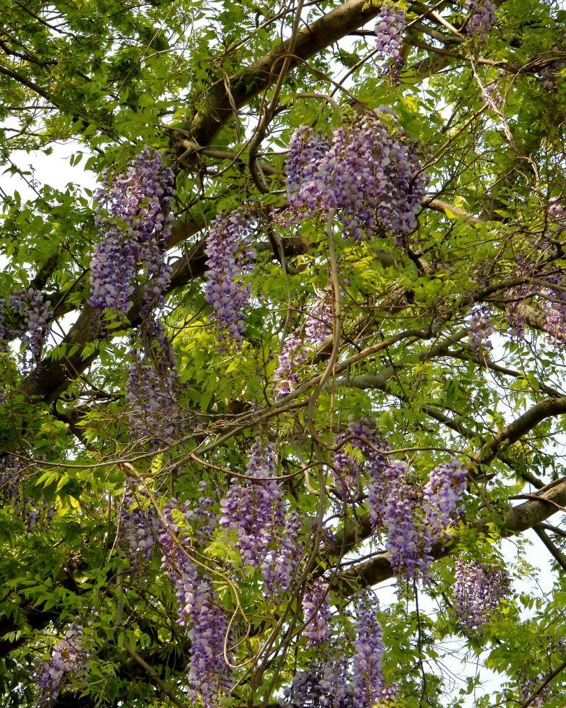 木の花と帰化植物_c0305565_17390110.jpg