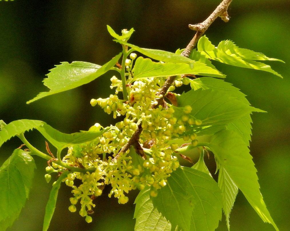 木の花と帰化植物_c0305565_17392801.jpg