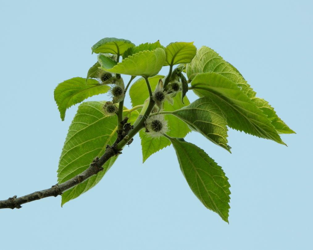 木の花と帰化植物_c0305565_17400688.jpg