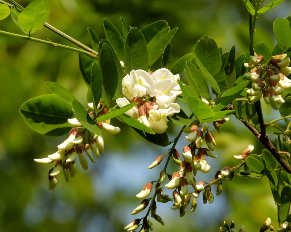 木の花と帰化植物_c0305565_17403380.jpg