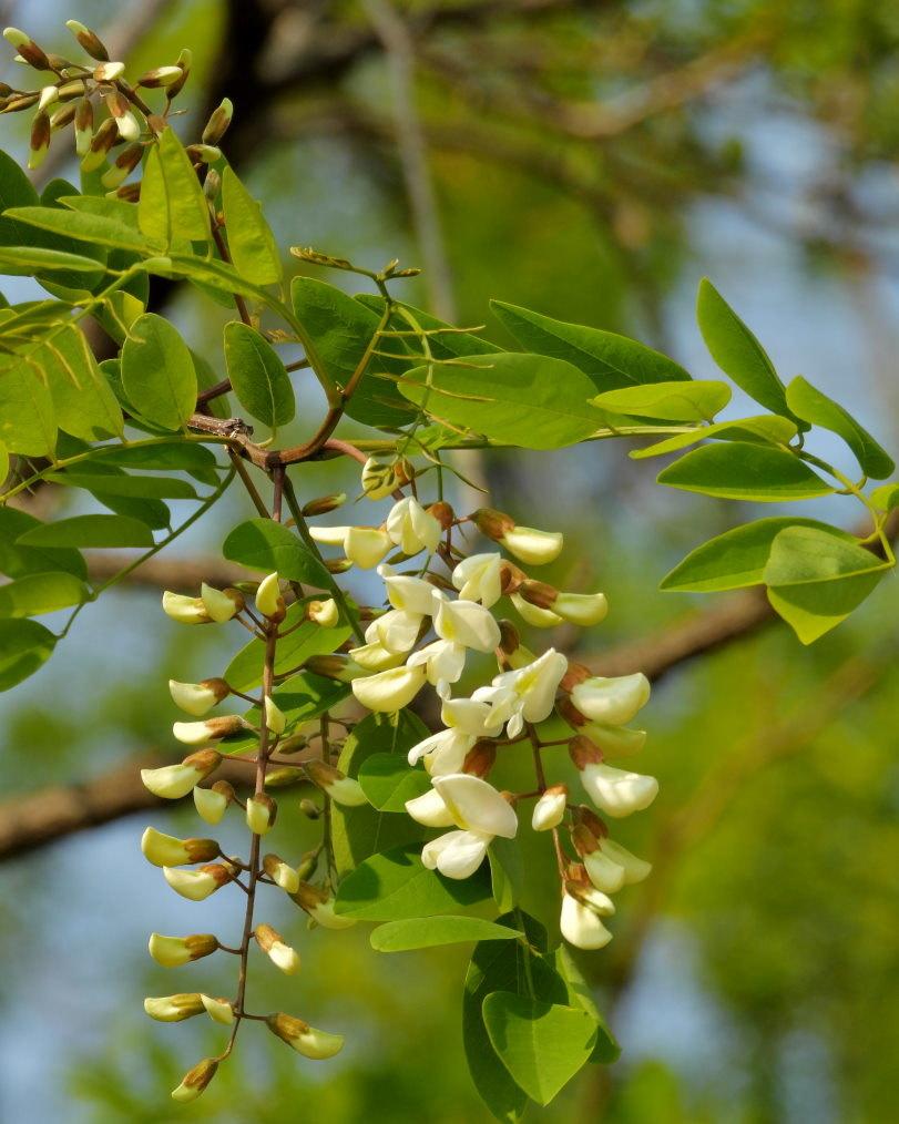 木の花と帰化植物_c0305565_17404889.jpg