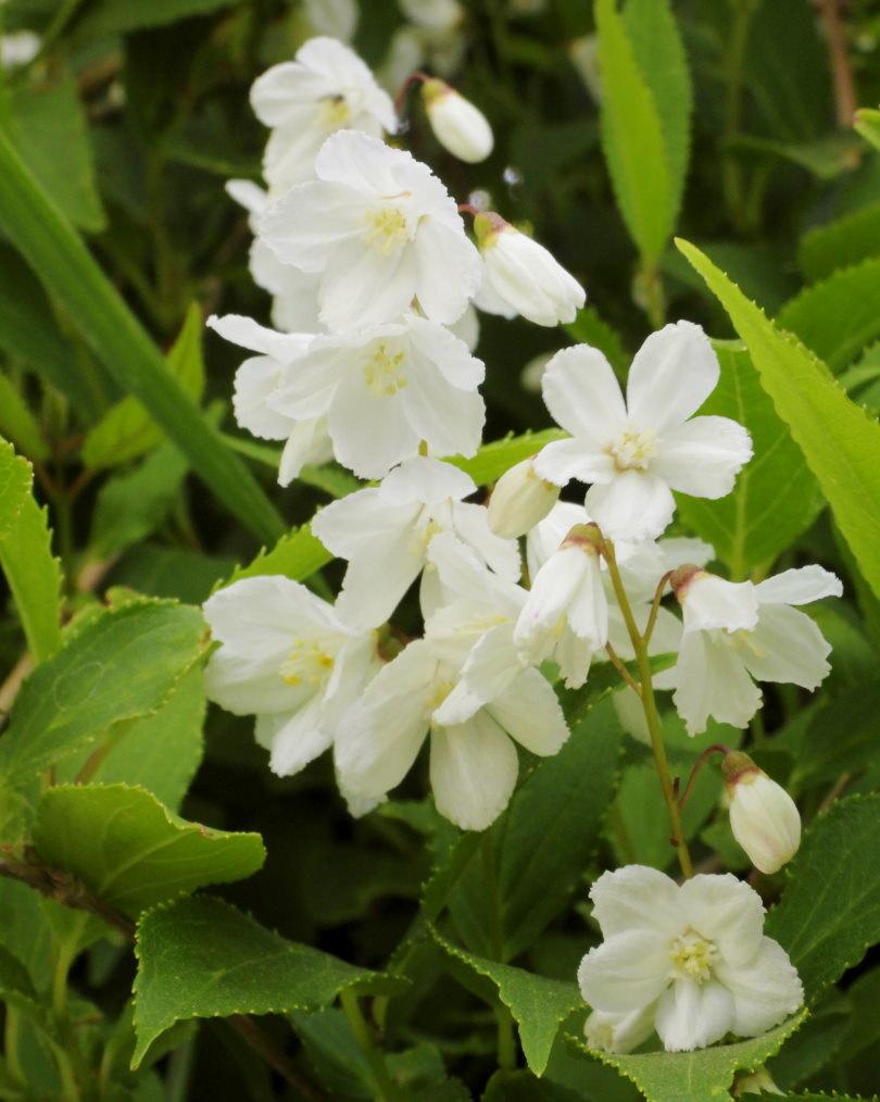 木の花と帰化植物_c0305565_17411038.jpg